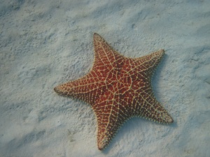 Star Fish - Turks and Caicos - Canon D10