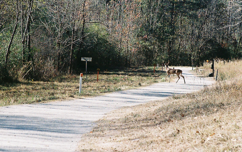 Deer - Atlanta - Canon AV-1 - 35-105 Zoom.
