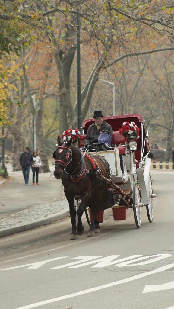 New-York City - Central Park - Fuji XT-1 - Canon 35-105 f/3.5 lens with Fotasy adapter